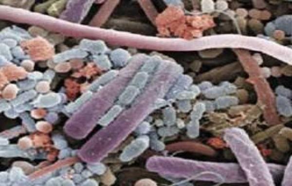 microbiotas