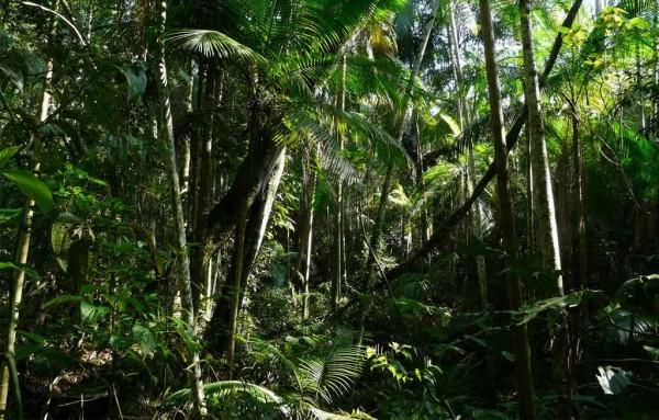 Sobrevivência na Selva - Posso comer essa fruta