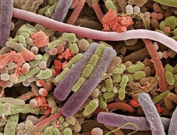 bactérias da língua